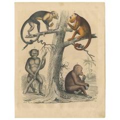 Antique Animal Print of various Monkeys by C. Hoffmann, 1847