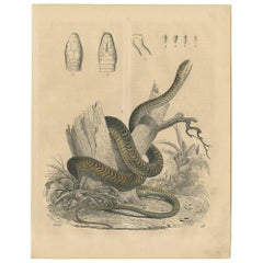 Antique Animal Print of a Snake by C. Hoffmann, 1847