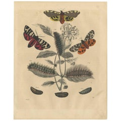 Antique Animal Print of various Butterflies by C. Hoffmann, 1847
