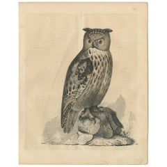 Antique Animal Print of an Owl by C. Hoffmann, 1847