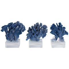 Three Blue Coral Sculptures on Lucite, Priced Individually