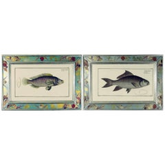 Pair of Engravings of Fish by Marcus Bloch, circa 1780