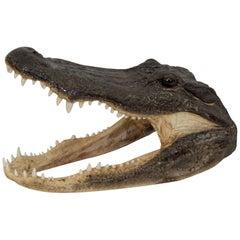 Vintage Taxidermy Alligator Head