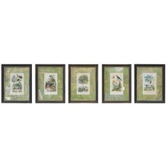 Set of Six Insect Lithographs