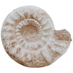 Antique Ammonite, Cretaceous Period