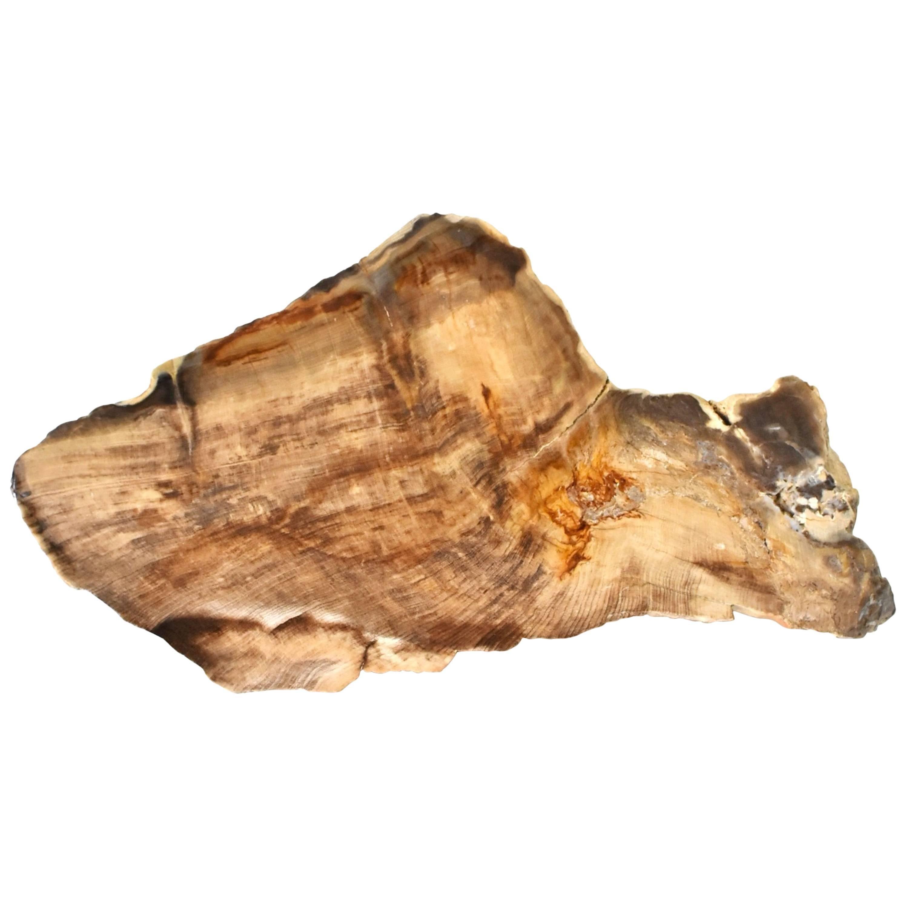 Petrified Wood Specimen
