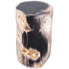 Petrified Wood Polished Side Table or Pedestal of High Quality