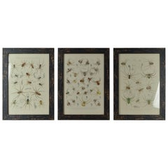 Set of 12 Antique Spider Prints, 1861