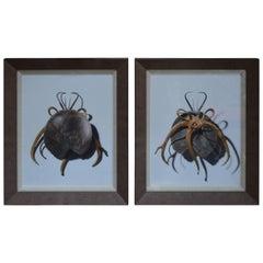 Set of Two Photos of Craft Beetles