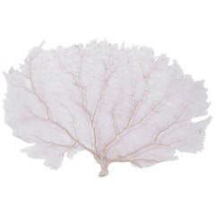 Large Cream Sea Fan