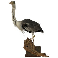 1960s Taxidermy Heron
