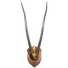 Highly Impressive Sporting Trophy of Gemsbok Horns, South Africa, circa 1880