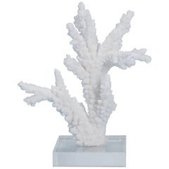 Branch Coral Sculpture on Lucite