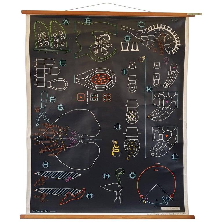 Vintage, Decorative Dr Auzoux Sougy Pull Down School Wall Chart, Botanical
