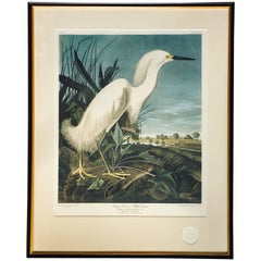 Limited Edition John James Audubon Snowy Heron or Egret Lithograph, Princeton
