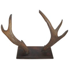 Mounted 19th Century Antlers Hat Hack