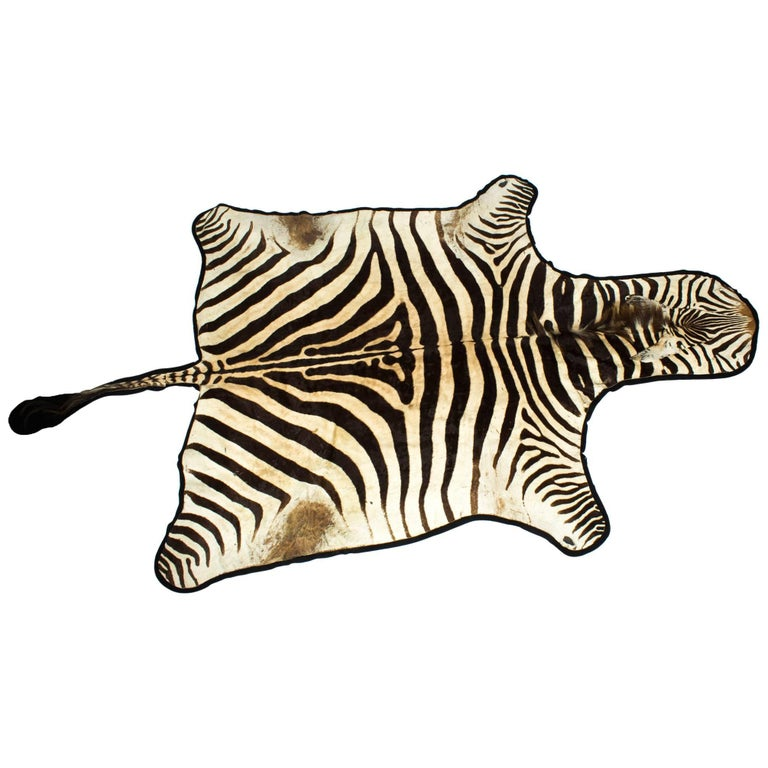 Vintage Large Taxidermy Zebra Skin Rug with Felt Backing, 20th Century