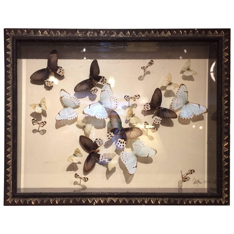 Magnificent Handmade Collection of Butterflies in Shadow Box