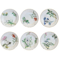 Set of Six Botanical Dessert Plates, First Period Bone China, circa 1815