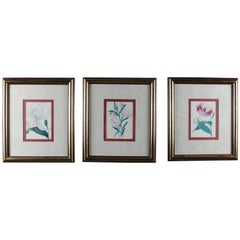 Framed Botanical Prints 'Lilium White' 'Lilium Rose' & 'Helochrsum' 20th Century