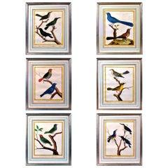 François Nicolas Martinet Engravings of Birds, Histoire Naturelle Des Oiseaux