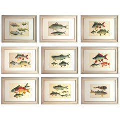 China Trade Watercolors of Fish on Pith Paper, circa 1850