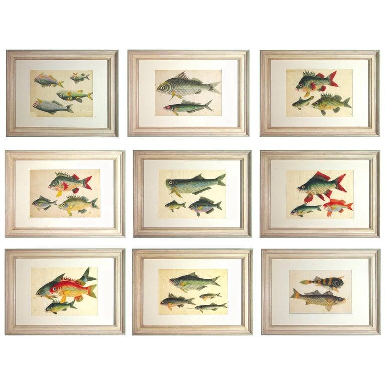 China Trade Watercolors of Fish on Pith Paper, circa 1850
