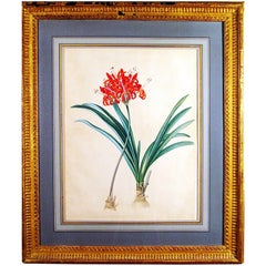 18th Century European Botanical Watercolor and Gouache Painting of Flowers
