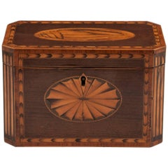 Antique Harewood Conch Shell Tea Caddy, 18th Century