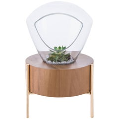 Terrarium Lampadari, Brazilian Wood, Metal and Glass