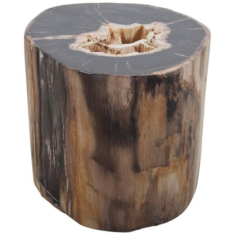 Large Petrified Wood Polished Side Table, Stool or Pedestal, Organic Modern