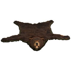 American Black Bear Taxidermy Rug