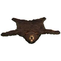 American Black Bear Taxidermy Rug