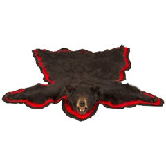 American Taxidermy Black Bear Rug