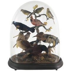 Victorian Cased Exotic Taxidermy Birds