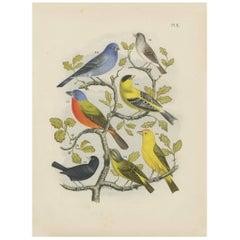Antique Bird Print of various Exotic Birds (1886)