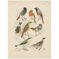 Antique Bird Print of the Robin, Blue Throat and European Stonechat (1886)