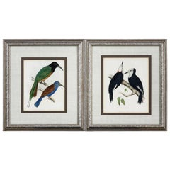 Pair of 19th Century Framed Ornithological Prints