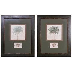 Pair of Botanical Palm Tree Watercolors