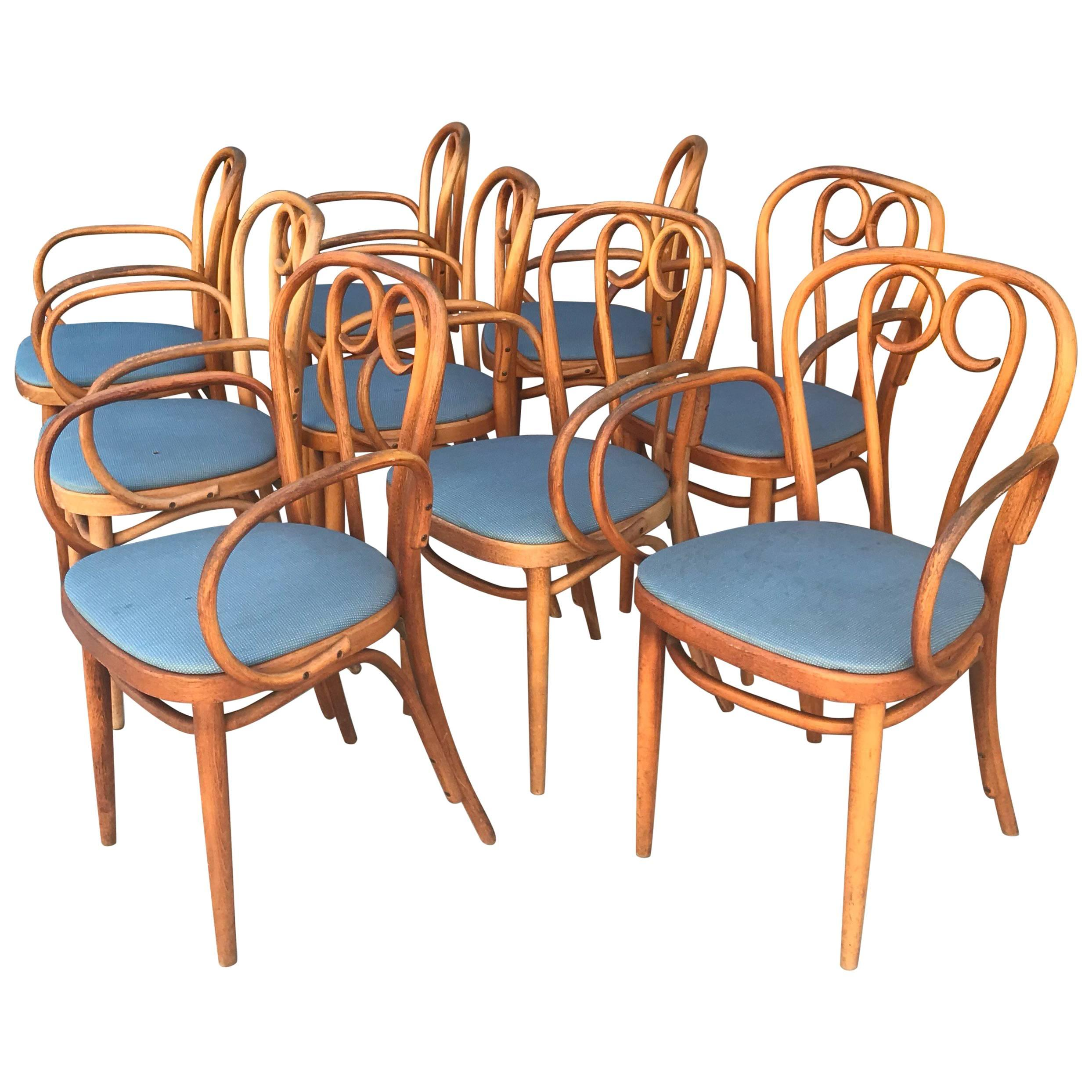 Bon Nine (9) Thonet Bentwood Dining Chairs, For Sale