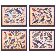 Set of Four Charming, Antique Framed Bird Lithographs