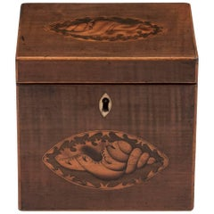 Harewood Antique Single Wooden Tea Caddy with Conch Shells, 18th Century