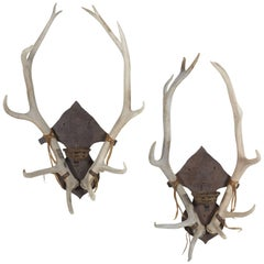 Antler and Iron Sconce Pair
