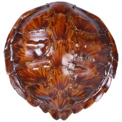 Antique Turtle or Tortoise Shell