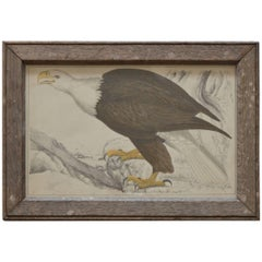 Original Antique Print of an Eagle, 1847