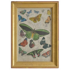 Original Antique Print of Butterflies, 1835