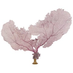 Pink Sea Fan Coral and Amethyst Quartz on 19th Century Gilt Bronze Fragment