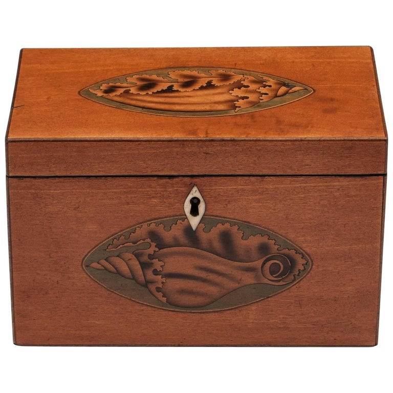 Satinwood Antique Tea Caddy with Inlaid Conch Shells, 18th Century