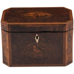 Georgian Antique Burr Yew Conch Shell Tea Caddy, 18th Century