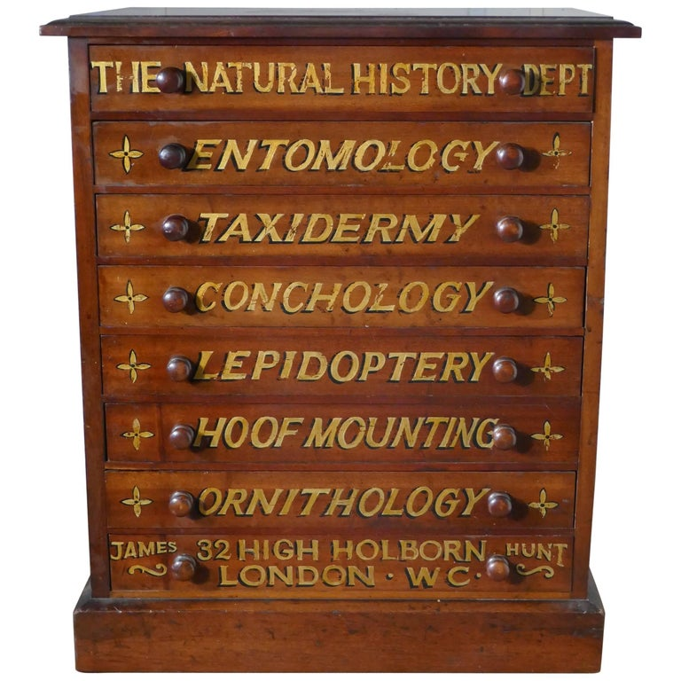 Small Museum Filing Cabinet, Natural History Collectors Cabinet